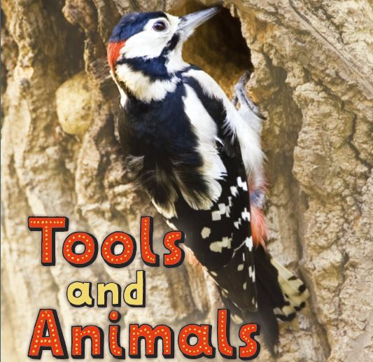 Tools and Animals